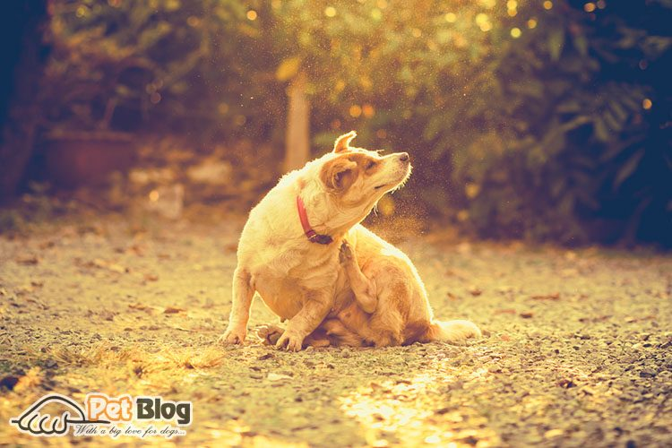 What Does It Mean To Have Dog Food Grain Free