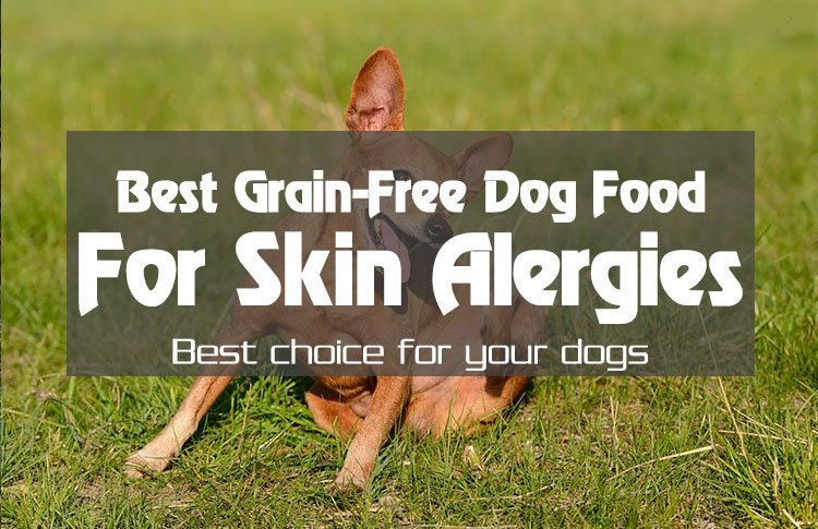 For Better Dog Health The 5 Best Grain Free Dog Food For Skin Allergies