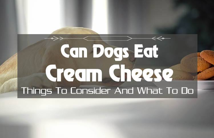 What Is The Truth Can Dogs Eat Cream Cheese Yes Or No Just