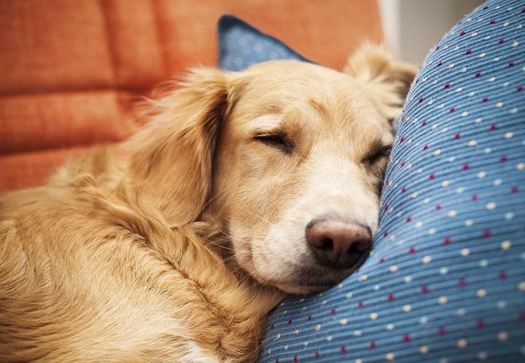 What Dog Foods Have Taurine In Them