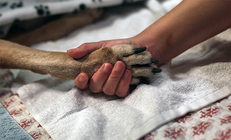 how many valium will kill a dog