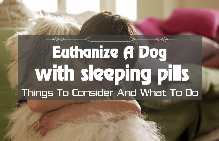 Euthanize Dog At Home Sleeping Pills