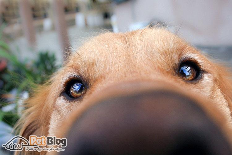 Why Are Dog Noses Black