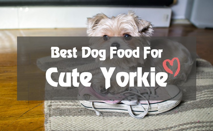Best Dog Food For Yorkies Really Right For Your Fur Baby