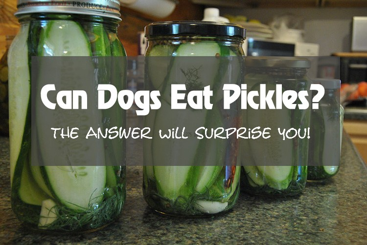 Can Dogs Eat Pickales