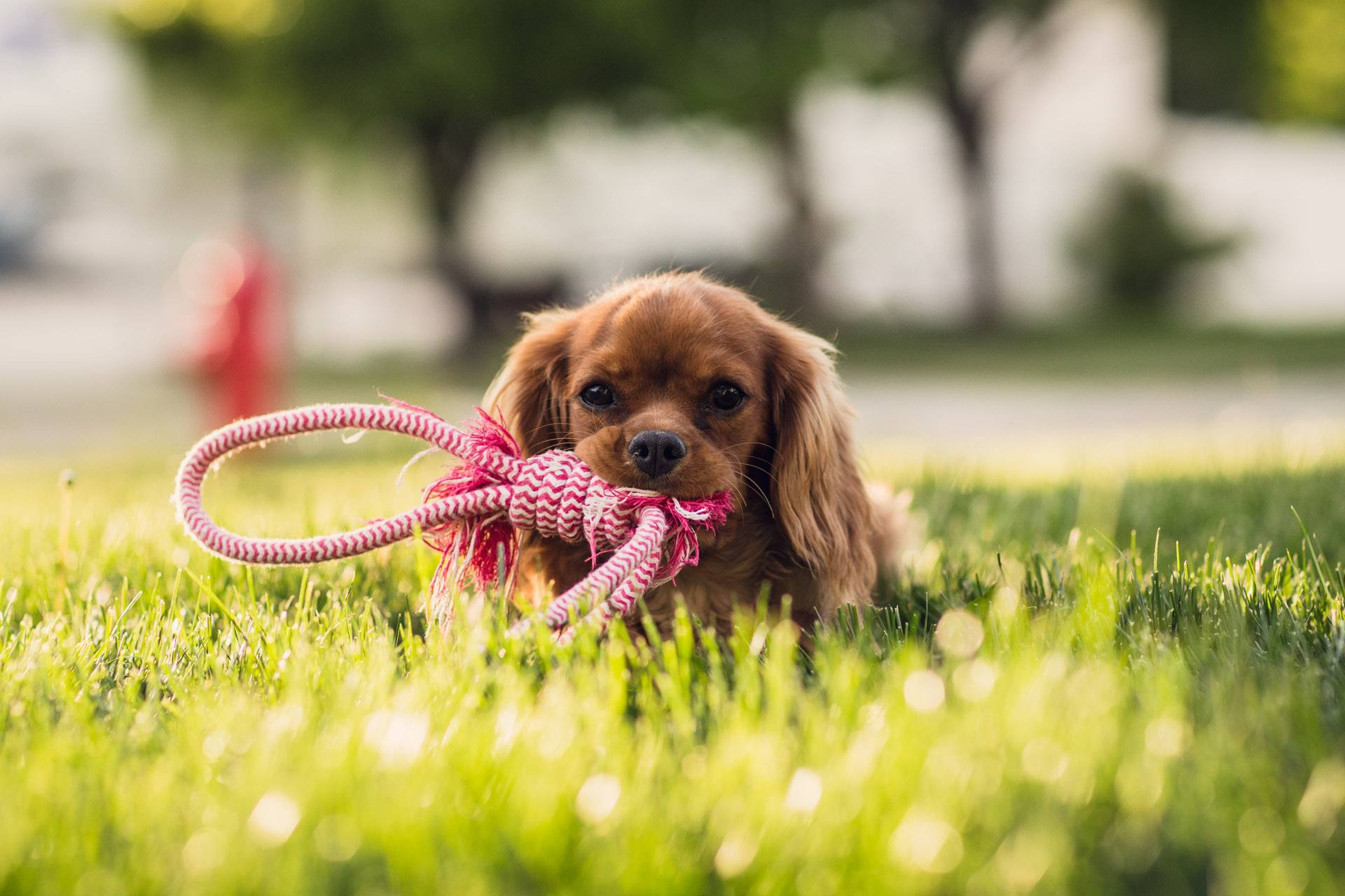 5 Best Puppy Toys Your Dogs Will Really Love Just Another Pet