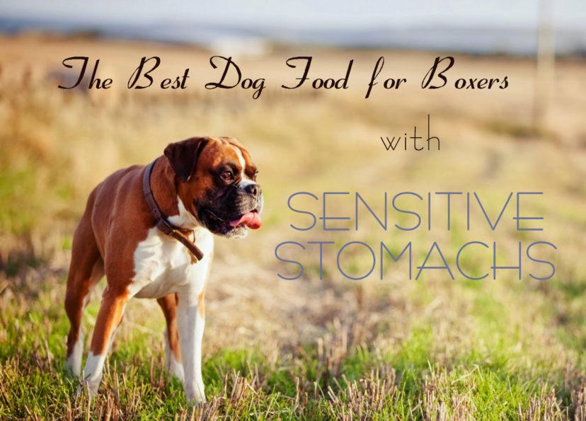Best Dog Food For Puppy Boxers