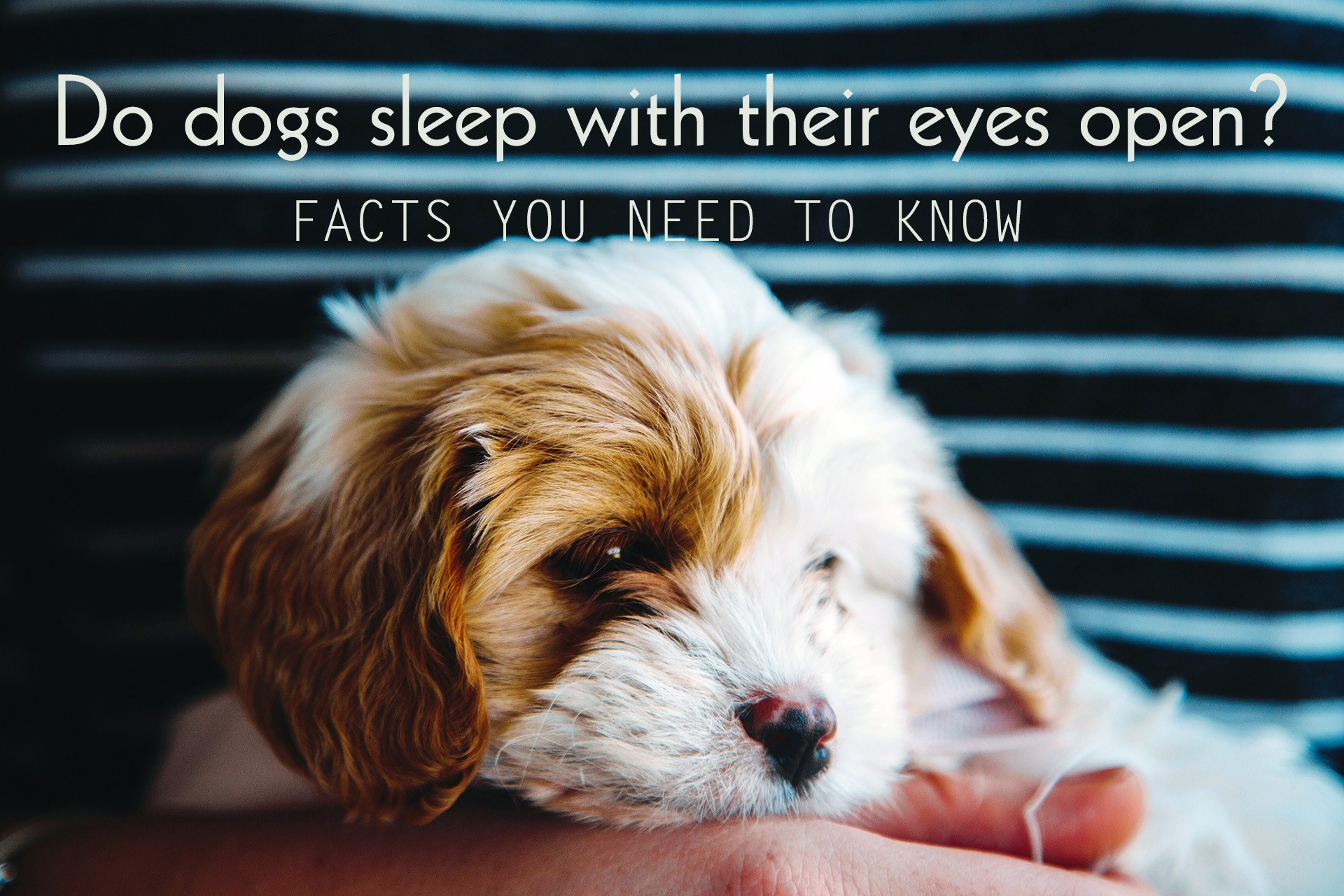 Why Do Dogs Like Sleeping With Their Owners