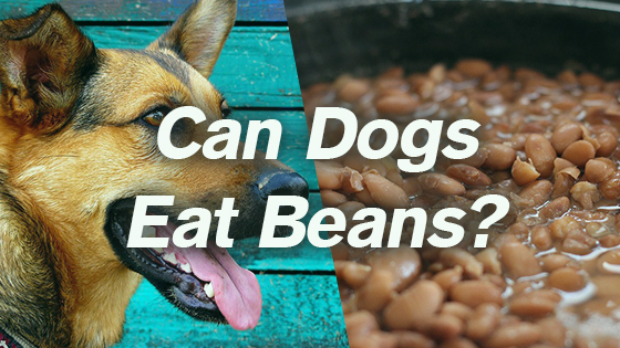 What People Food Can Dogs Safely Eat