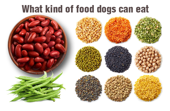 Can Dogs Eat Beans Legumes